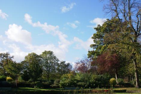 Autumnal Moor